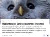 Habichtskauz: Schützenswerte Seltenheit